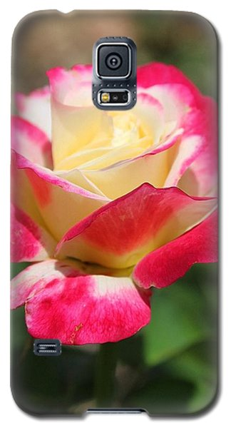 Red And Yellow Rose Galaxy S5 Case