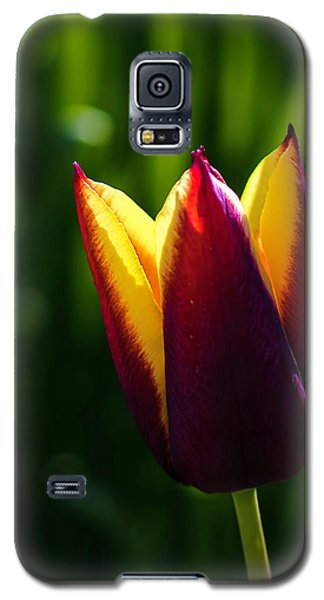 Red And Yellow Tulip Galaxy S5 Case