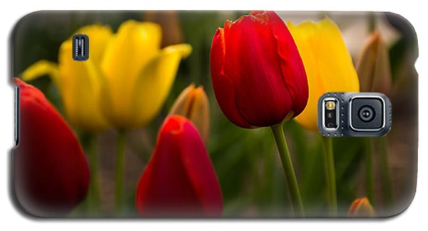 Red And Yellow Tulips Galaxy S5 Case