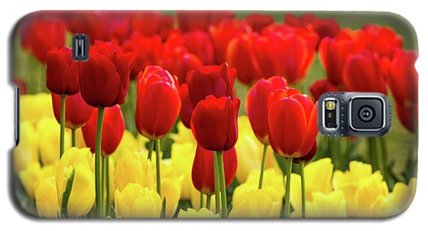 Galaxy S5 Case featuring the photograph Red And Yellow Tulips by Mary Jo Allen