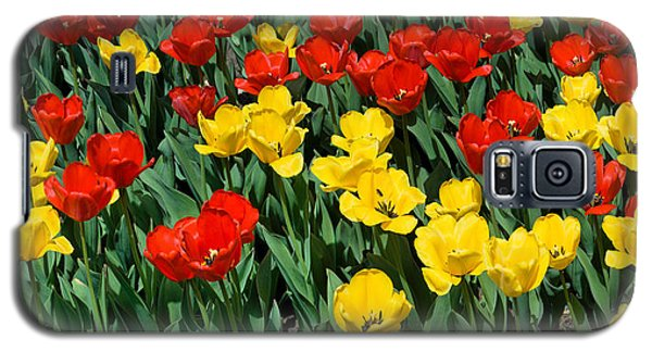 Red And Yellow Tulips  Naperville Illinois Galaxy S5 Case by Michael Bessler
