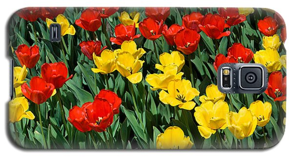 Red And Yellow Tulips  Naperville Illinois Galaxy S5 Case