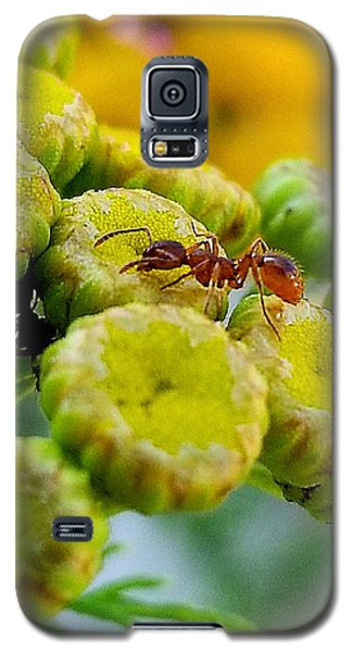 Red Ant Galaxy S5 Case