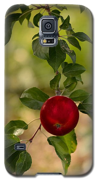 Red Apple Ready For Picking Galaxy S5 Case