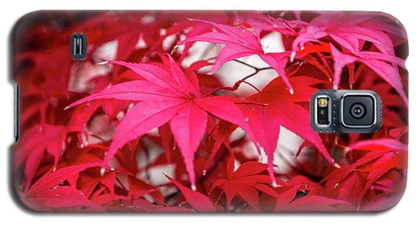 Red Autumn Galaxy S5 Case