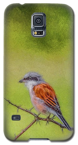 Red-backed Shrike Galaxy S5 Case