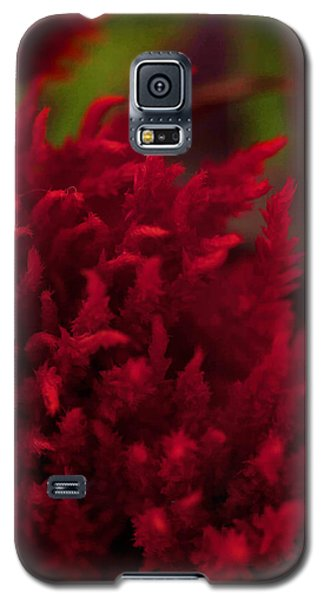 Galaxy S5 Case featuring the photograph Red Beauty by Cherie Duran