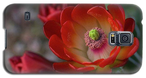 Galaxy S5 Case featuring the photograph Red Beauty  by Saija Lehtonen