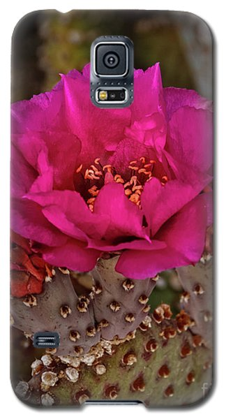 Galaxy S5 Case featuring the photograph Red Beavertail Cactus Bloom by Robert Bales