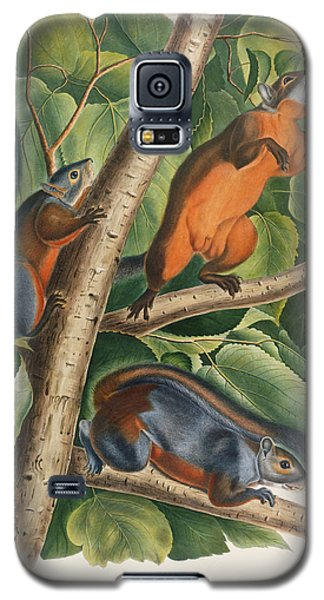 Red Bellied Squirrel  Galaxy S5 Case by John James Audubon