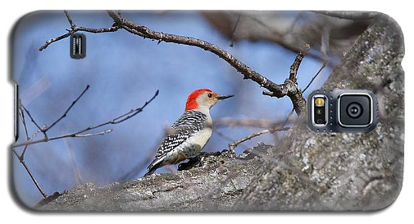 Galaxy S5 Case featuring the photograph Red-bellied Woodpecker 1134 by Michael Peychich