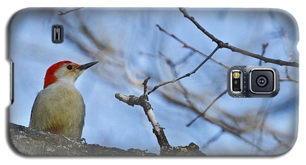 Galaxy S5 Case featuring the photograph Red-bellied Woodpecker 1137 by Michael Peychich