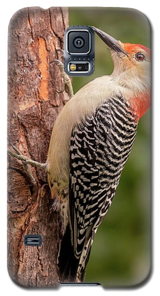 Red Bellied Woodpecker 3 Galaxy S5 Case