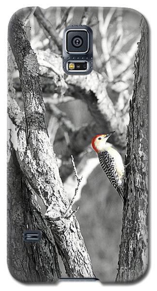 Galaxy S5 Case featuring the photograph Red-bellied Woodpecker by Benanne Stiens