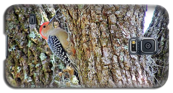 Galaxy S5 Case featuring the photograph Red-bellied Woodpecker By Bill Holkham by Bill Holkham