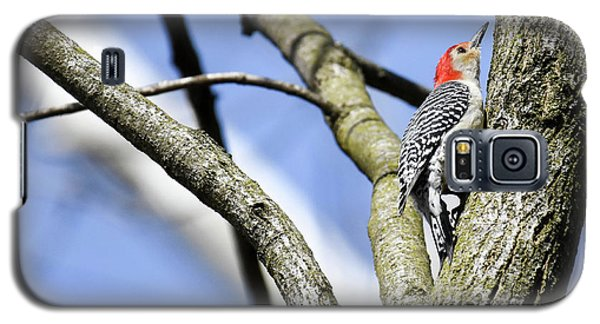 Galaxy S5 Case featuring the photograph Red-bellied Woodpecker by Gary Wightman