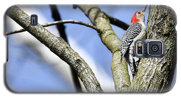 Red-bellied Woodpecker Galaxy S5 Case