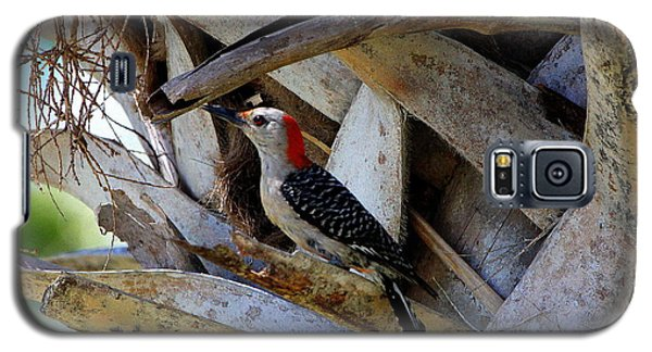 Galaxy S5 Case featuring the photograph Red-bellied Woodpecker Hides On A Cabbage Palm by Barbara Bowen
