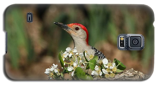 Red-bellied Woodpecker In Spring Galaxy S5 Case
