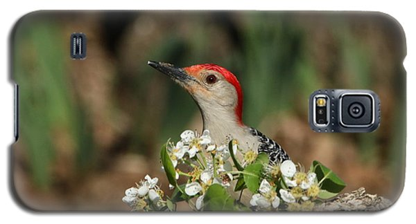 Red-bellied Woodpecker In Spring Galaxy S5 Case