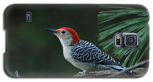 Red-bellied Woodpecker In The Pines Galaxy S5 Case