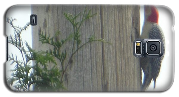 Galaxy S5 Case featuring the photograph Red Bellied Woodpecker by Rockin Docks Deluxephotos