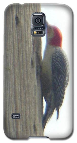 Red Bellied Woodpecker Galaxy S5 Case