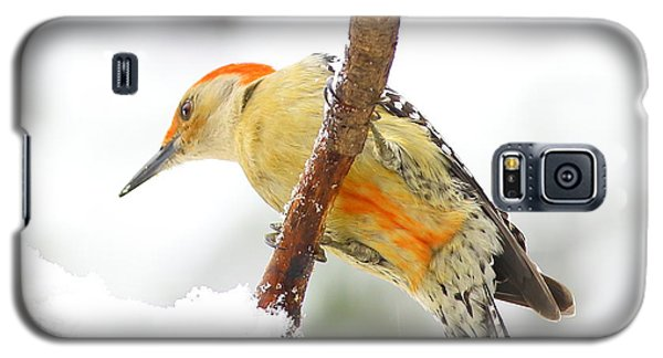 Red-bellied Woodpecker With Snow Galaxy S5 Case