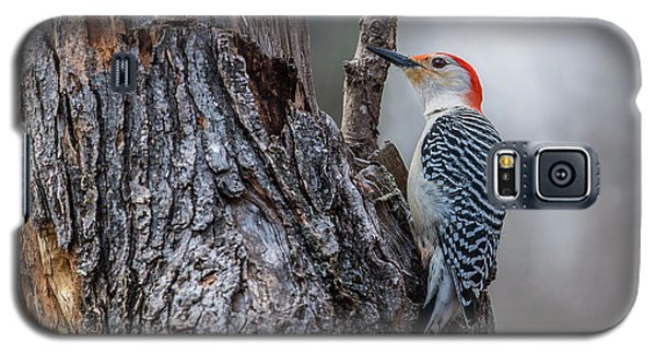 Galaxy S5 Case featuring the photograph Red Bellied Woody by Paul Freidlund