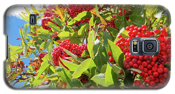 Red Berries, Blue Skies Galaxy S5 Case