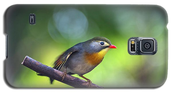 Red Billed Leiothrix Galaxy S5 Case