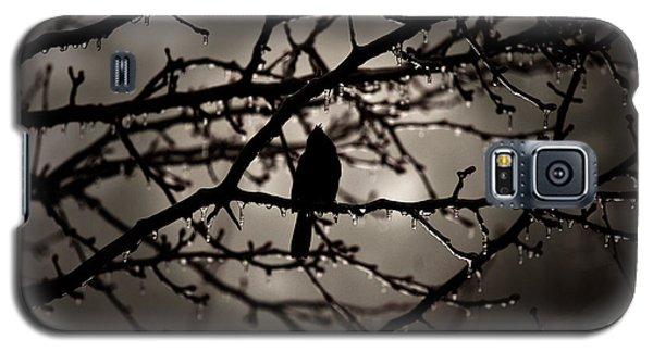 Red Bird At Dawn Galaxy S5 Case