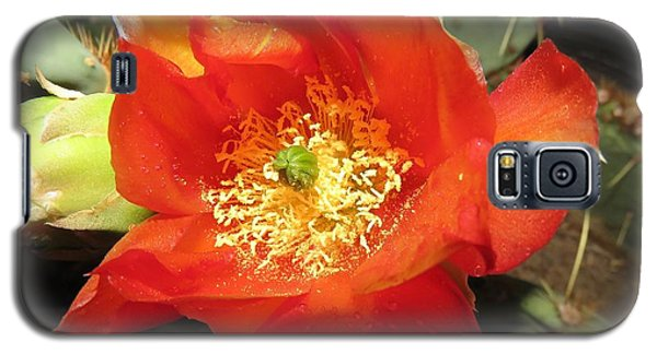 Red Bloom 1 - Prickly Pear Cactus Galaxy S5 Case