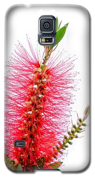 Red Bottle Brush Against An Overcast Sky Galaxy S5 Case