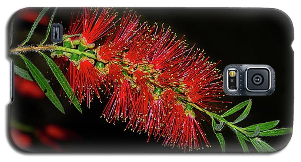 Galaxy S5 Case featuring the photograph Red Bottlebrush By Kaye Menner by Kaye Menner