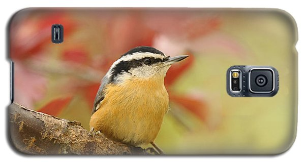 Red Breasted Nuthatch  Galaxy S5 Case