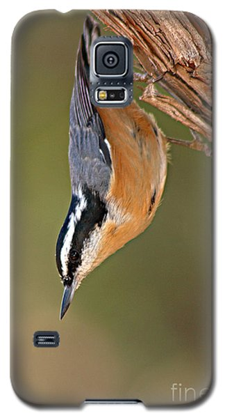 Red-breasted Nuthatch Upside Down Galaxy S5 Case by Max Allen