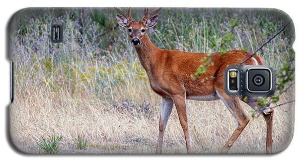 Red Bucks 1 Galaxy S5 Case
