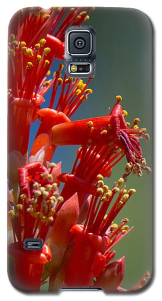 Red Cactus Flower 1 Galaxy S5 Case