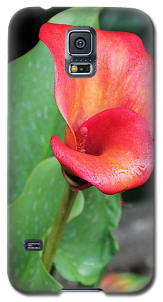 Red Calla Lily Galaxy S5 Case