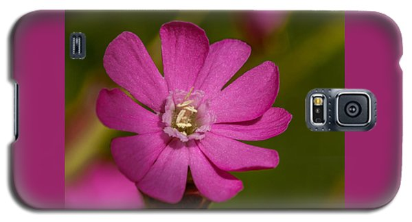 Red Campion Galaxy S5 Case