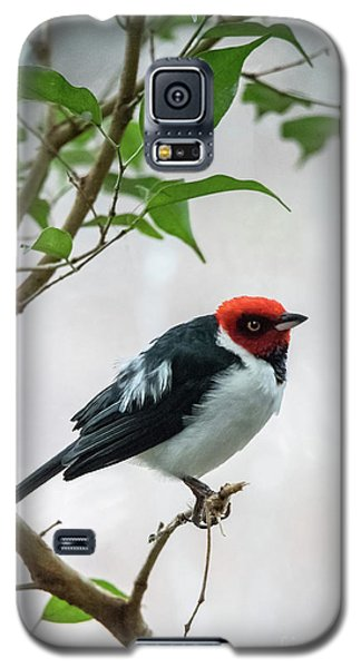 Red Capped Cardinal 2 Galaxy S5 Case
