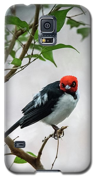 Red Capped Cardinal Galaxy S5 Case