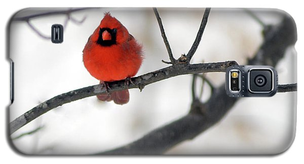 Galaxy S5 Case featuring the photograph Red Cardinal In Snow by Marie Hicks