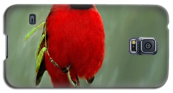 Red Cardinal Painting Galaxy S5 Case