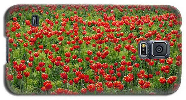 Galaxy S5 Case featuring the photograph Red Carpet by Tom Vaughan
