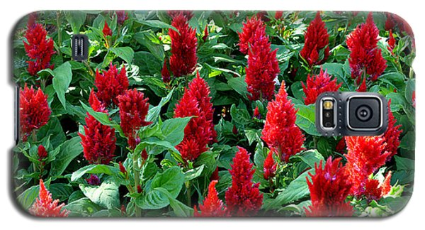 Galaxy S5 Case featuring the photograph Red Celosia Garden by Glenn McCarthy Art and Photography