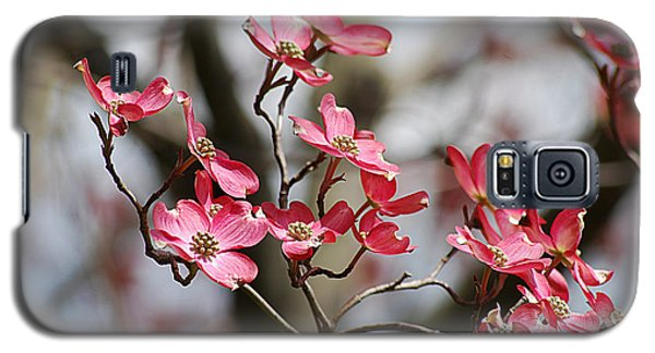 Galaxy S5 Case featuring the photograph Red Cloud Dogwood 2012410_90a by Tina Hopkins