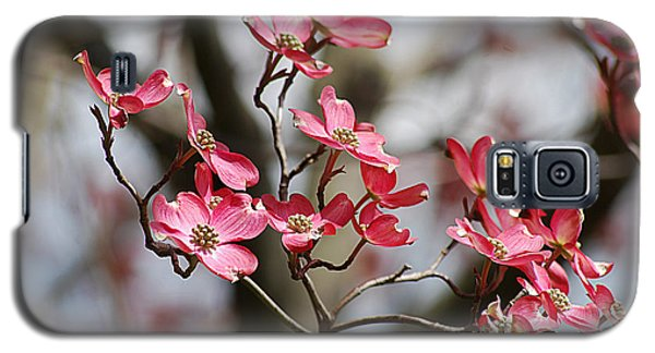 Red Cloud Dogwood 2012410_90a Galaxy S5 Case