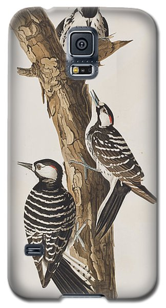 Red-cockaded Woodpecker Galaxy S5 Case